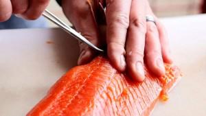 duri ikan salmon