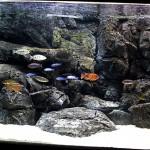 Background-3D-akuarium